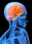 Brain Photo